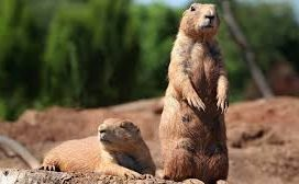 Are you still using gophers to market your business?